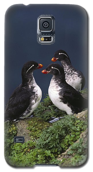 Auklets Galaxy S5 Case - Parakeet Auklet by Art Wolfe