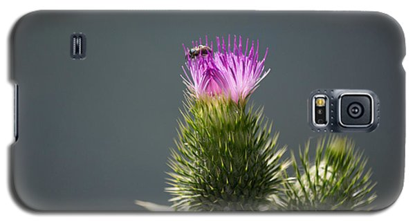 Purple Flower And Bee Galaxy S5 Case