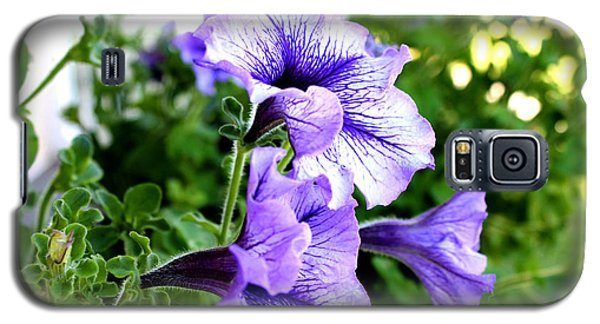3 Purple Petunias Galaxy S5 Case