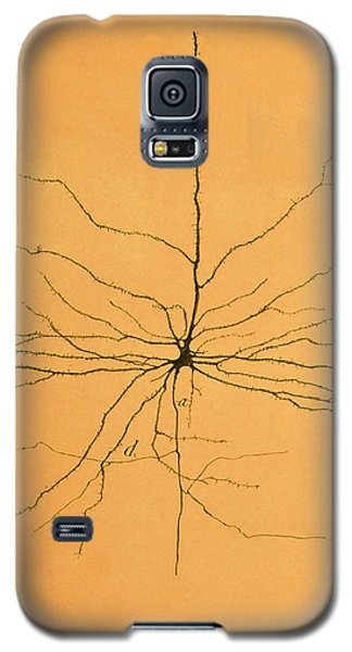 Pyramidal Cell In Cerebral Cortex, Cajal Galaxy S5 Case