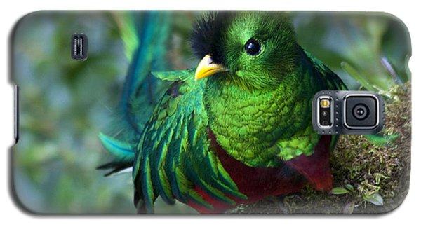 Quetzal Galaxy S5 Case