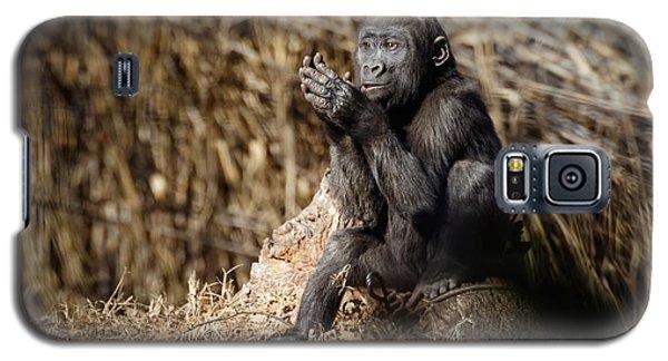 Quiet Juvenile Gorilla Galaxy S5 Case