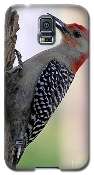 Galaxy S5 Case featuring the photograph Red Bellied Woodpecker  by Meg Rousher