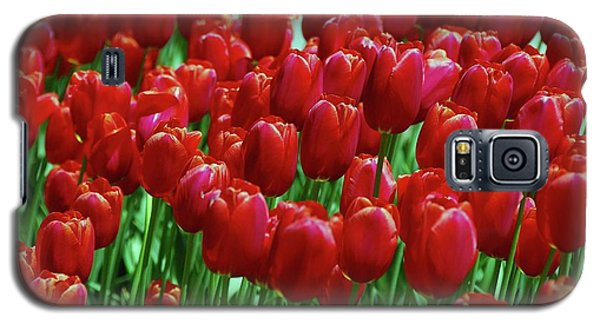 Galaxy S5 Case featuring the photograph Red Tulips  by Allen Beatty