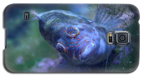 Galaxy S5 Case featuring the photograph Redspotted Hawkfish  by Savannah Gibbs