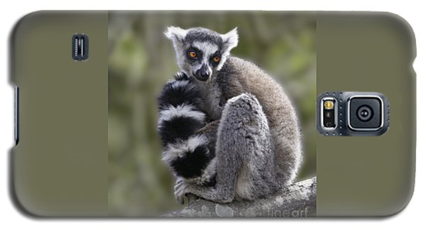 Ring-tailed Lemur Galaxy S5 Case