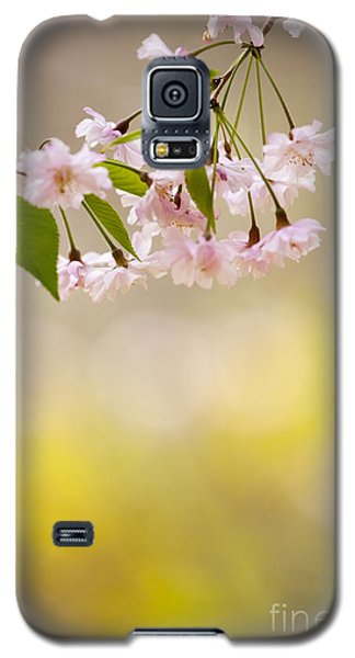 Sakura Galaxy S5 Case