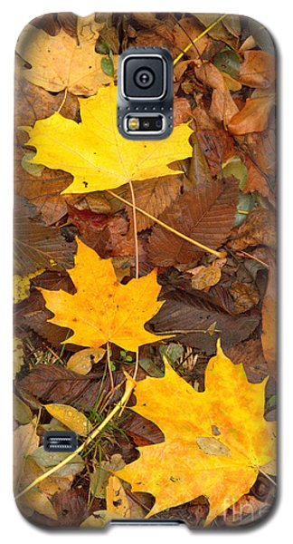 Galaxy S5 Case featuring the photograph 3 Shades Of Yellow by Jim McCain