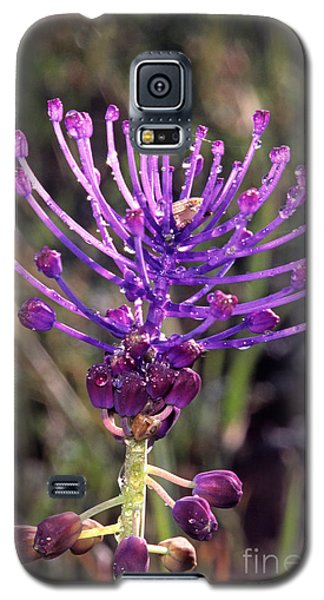 Galaxy S5 Case featuring the photograph Spring Wild Flower by George Atsametakis