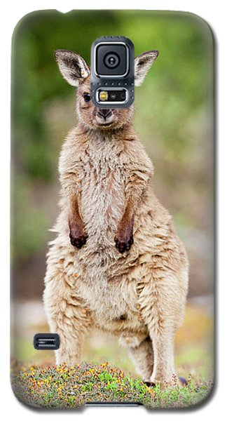 Western Grey Kangaroo (macropus Galaxy S5 Case by Martin Zwick