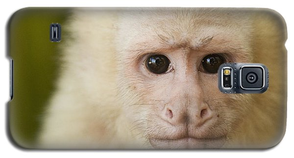 White-faced Capuchin Galaxy S5 Case