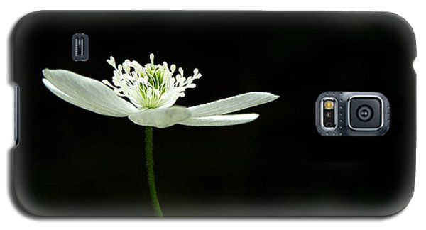 Wood Anenome Galaxy S5 Case by Angie Rea