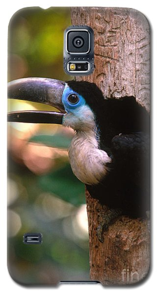 Yellow-ridged Toucan Galaxy S5 Case by Art Wolfe