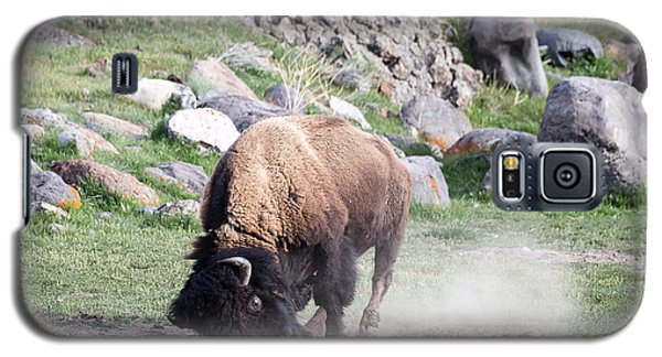 Yellowstone Bison Galaxy S5 Case