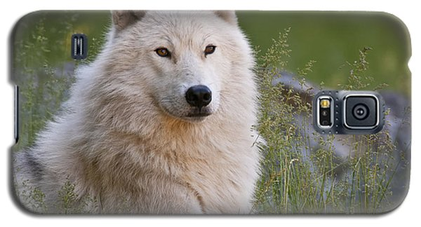 Arctic Wolf Galaxy S5 Case by Wolves Only