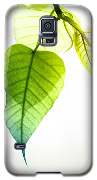 Pho Or Bodhi Galaxy S5 Case