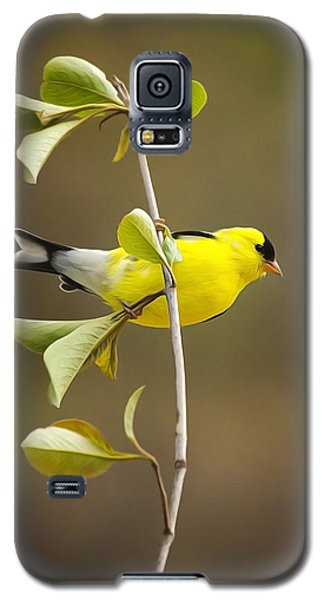 American Goldfinch Galaxy S5 Case by Christina Rollo