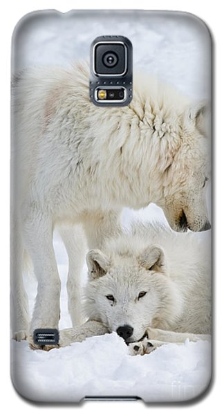 Arctic Wolves Galaxy S5 Case
