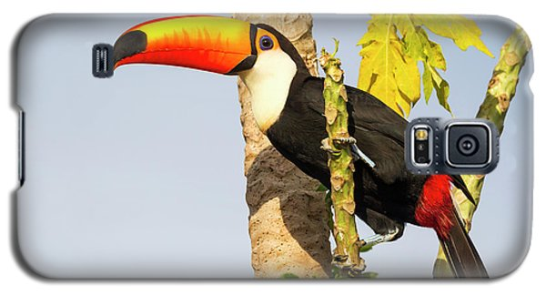 Brazil, Mato Grosso, The Pantanal, Toco Galaxy S5 Case