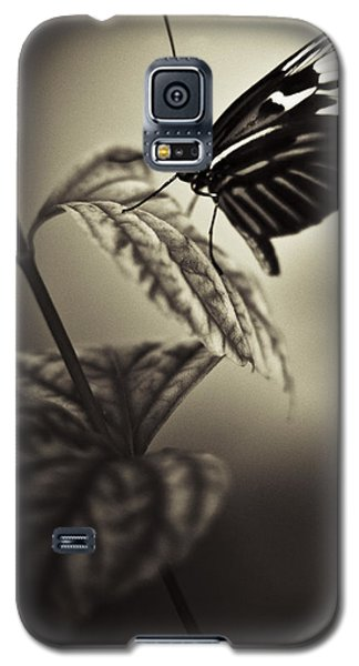 Butterfly Brown Tone Galaxy S5 Case