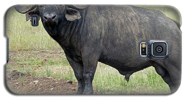 Cape Buffalo Galaxy S5 Case