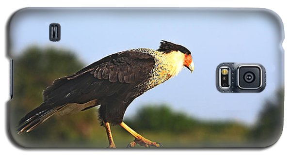 Crested Caracara Galaxy S5 Case