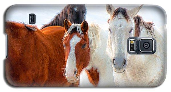 4 Horses Galaxy S5 Case