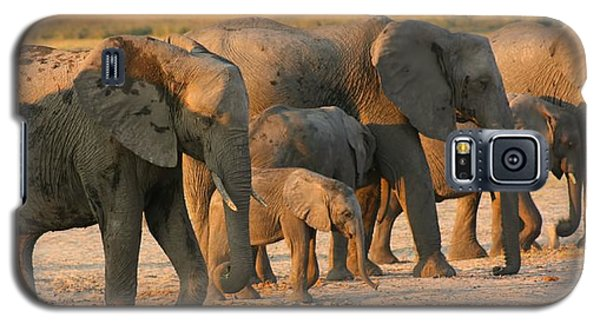 Galaxy S5 Case featuring the photograph Kalahari Elephants by Amanda Stadther