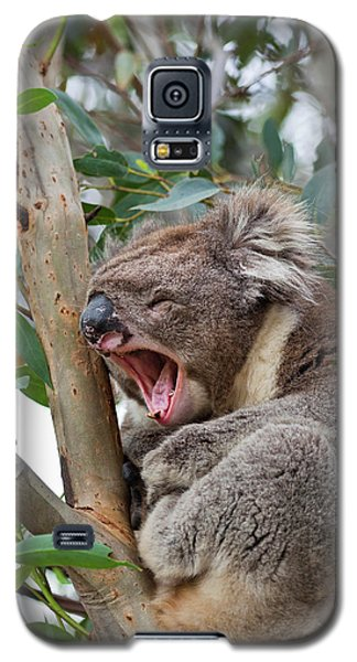 Koala Galaxy S5 Case - Koala (phascolarctos Cinereus by Martin Zwick