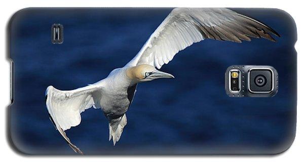 Northern Gannet In Flight Galaxy S5 Case