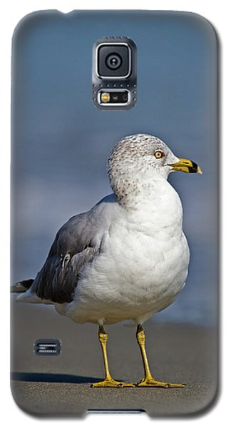 Seagull Vii Galaxy S5 Case