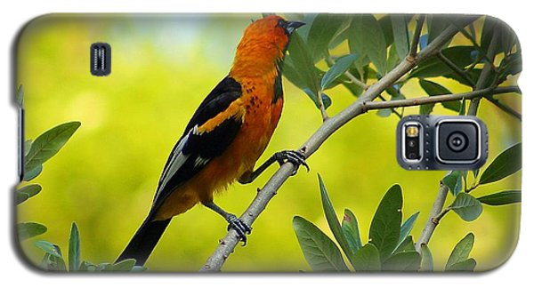 Spot Breasted Oriole Galaxy S5 Case