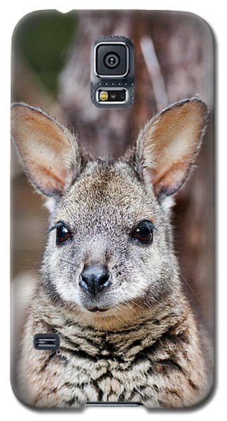 Tammar Wallaby (macropus Eugenii Galaxy S5 Case by Martin Zwick