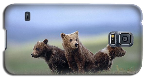 4 Young Brown Bear Cubs Huddled Galaxy S5 Case by Eberhard Brunner