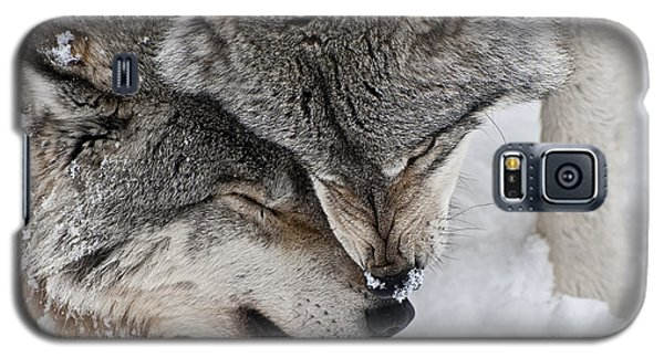 Timber Wolf Pictures Galaxy S5 Case by Wolves Only