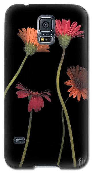 4daisies On Stems Galaxy S5 Case by Heather Kirk