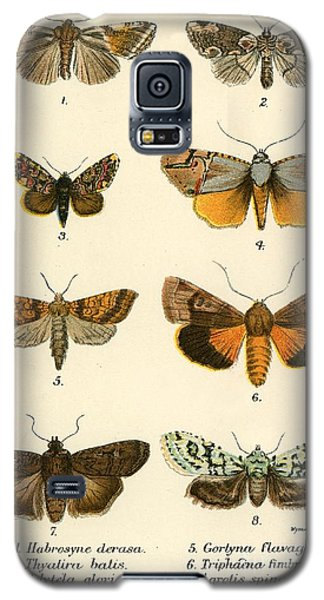 Butterfly Galaxy S5 Case - Butterflies by English School
