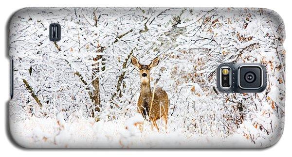 Doe Mule Deer In Snow Galaxy S5 Case