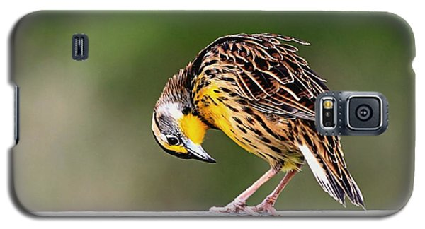 Eastern Meadowlark Galaxy S5 Case