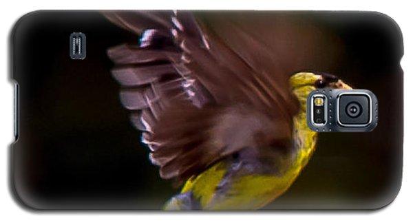 Gold Finch Galaxy S5 Case by Brian Williamson