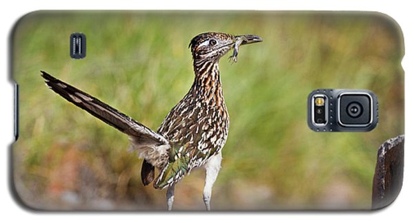 Roadrunner Galaxy S5 Case - Greater Roadrunner (geococcyx by Larry Ditto