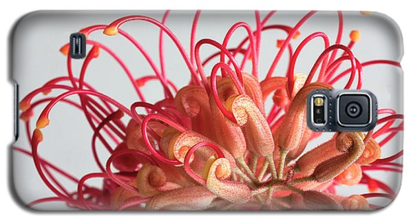 Galaxy S5 Case featuring the photograph Grevillea Flower by Shirley Mitchell