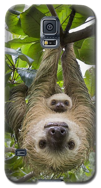 Hoffmanns Two-toed Sloth And Old Baby Galaxy S5 Case