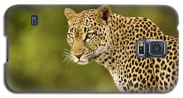 Lovely Leopard Galaxy S5 Case