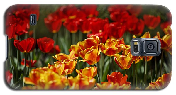 Tulip Galaxy S5 Case - Red And Yellow Tulips by Nailia Schwarz