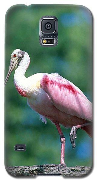 Roseate Spoonbill Galaxy S5 Case