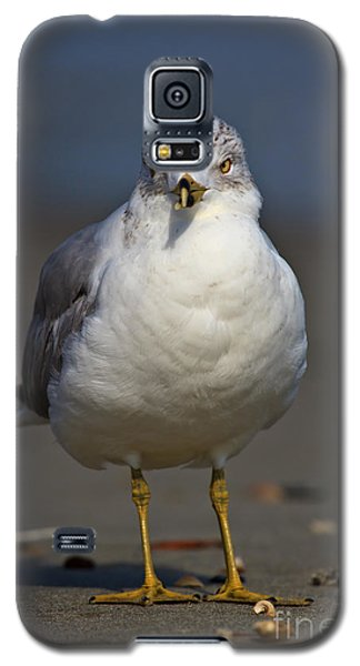 Seagull Vi Galaxy S5 Case