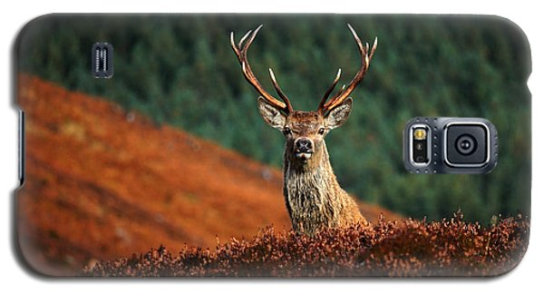 Red Deer Stag Galaxy S5 Case