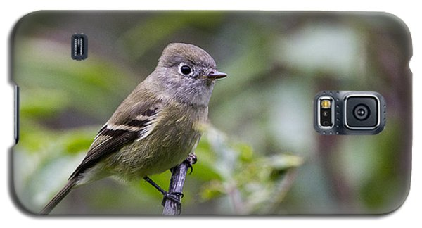 Alder Flycatcher Galaxy S5 Case