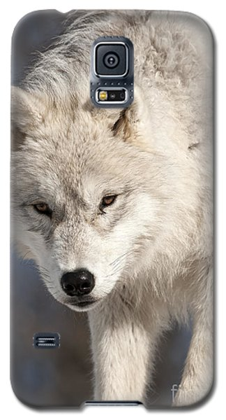 Arctic Wolf Pup Galaxy S5 Case by Wolves Only